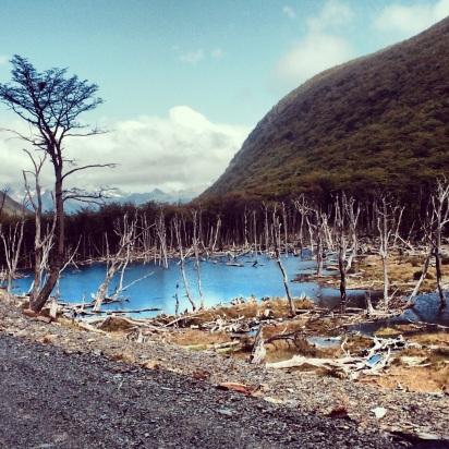 laguna producida por la represa de un castor en tierra del fuego